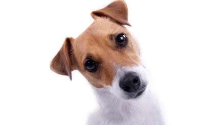 cachorro-pergunta-petrede