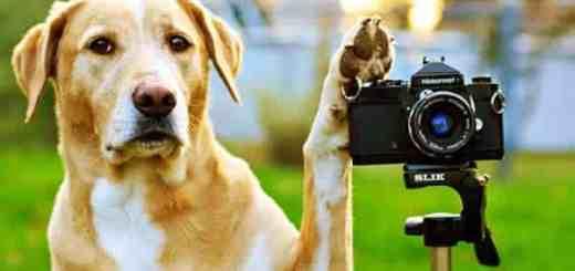 cachorro-fotografo-petrede