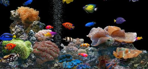 aquario-petrede