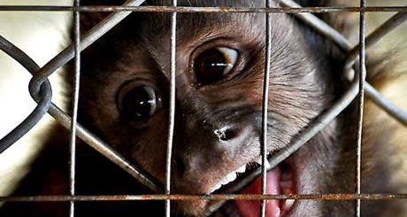 macaco-preso-grade-gaiola-petrede