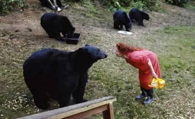 mulher-alimenta-ursos-petrede