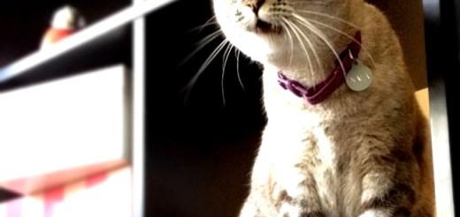 gato-espantado-pasmo-surpreso-petrede