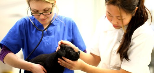 medica-veterinaria-cachorro-consulta-exame-enfermeira-petrede