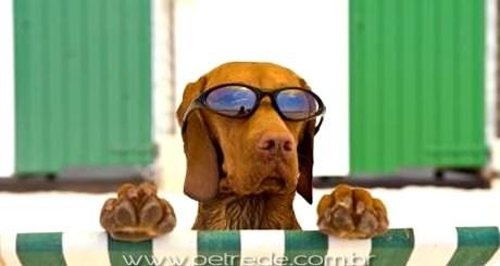 cachorro-ferias-verao-oculos-petrede