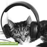 gato-ouvindo-musica-fone-petrede