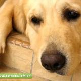 cachorro-triste-petrede