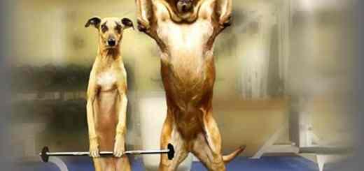 cachorro-exercicio-academia-atividade-fisica-petrede