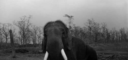 patrick_brown-20-elefante
