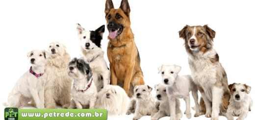cachorros-de-varias-racas-petrede