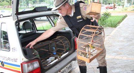 aves-mototaxista-JM-Online