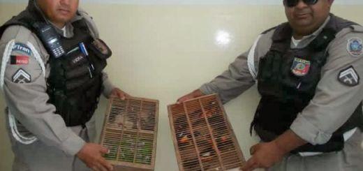 Policiais com aves apreendidas / Foto: Divulgação CPTran