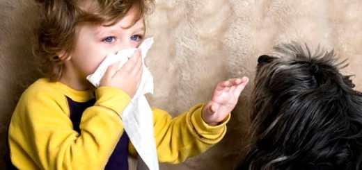 crianca-alergia-cachorro-espirro-petrede