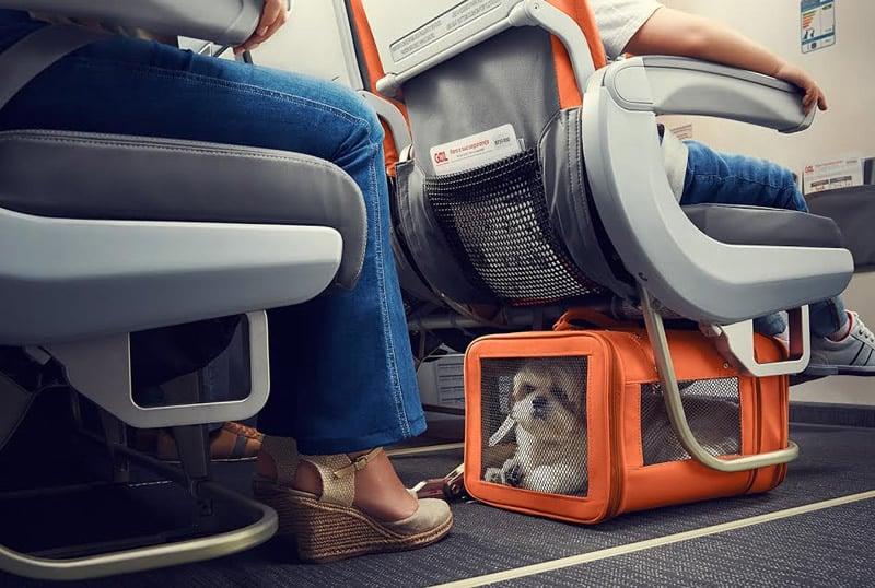 gol-amplia-servico-de-transporte-de-pets-na-cabine-para-voos-internacionais-petrede