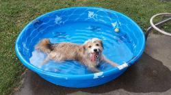Small Of How Often Should I Bathe My Dog