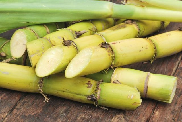 Waste from Philippine sugarcane will be used to produce electricity in the biomass project.