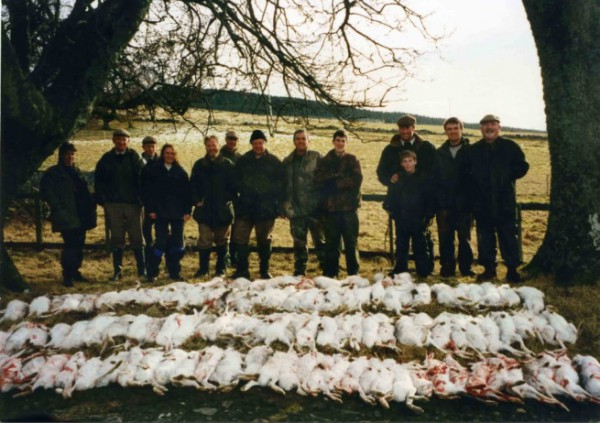 Angus Glens mountain hare slaughter. Courtesy of Raptor Persecution Scotland