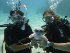 Scuba diving teddy bear wins a competition