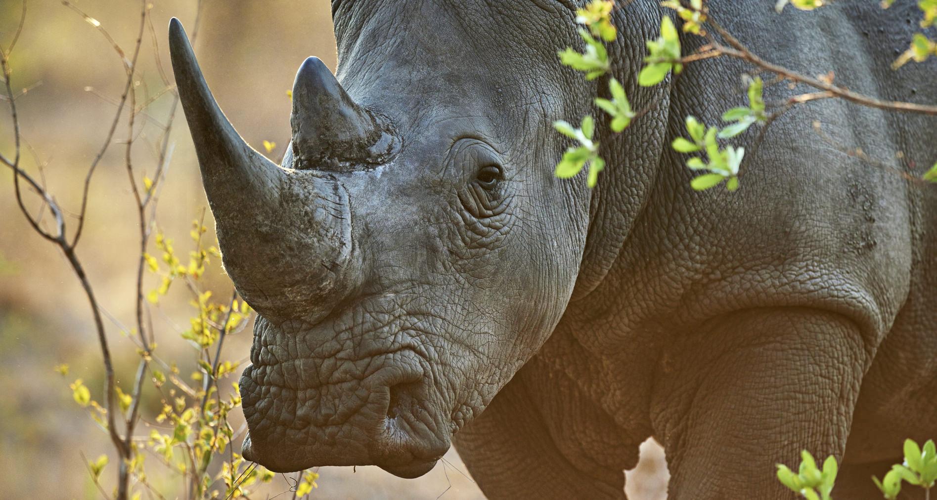 Guida passo-passo per migliorare le tue foto Wildlife