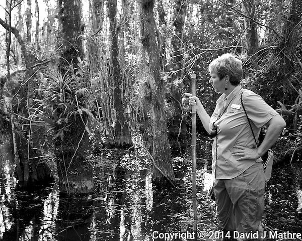 Time to get your feet wet. Swamp walk with Kristen and Angela in the Everglades behind  Clyde Butcher's Big Cyprus Gallery. Image taken with a Leica X2 camera (ISO 100, 24 mm, f/3.5, 1/80 sec). (David J Mathre)