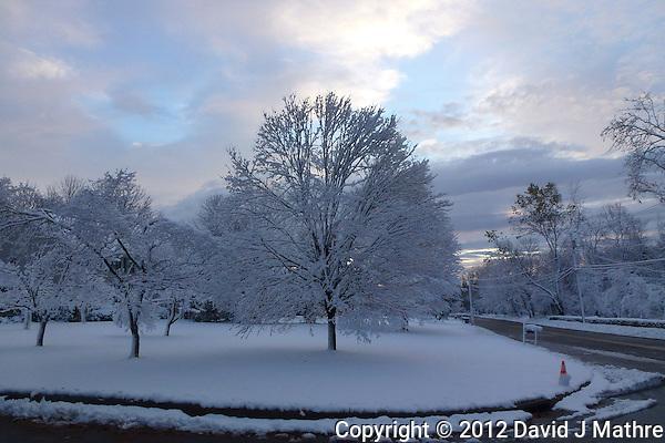 Snow Post Hurricane Sandy. Image taken with a Leica V-Lux 30 camera (David J Mathre)