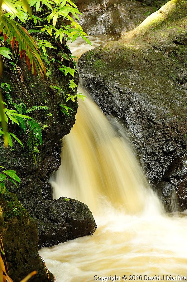 Onomea Water Falls, Hawaii Tropical Botanical Gardens. Image taken with a Nikon D2xs and 105 mm f/2.8 macro (ISO 100, f/5.6, 1/6 sec). (David J Mathre)