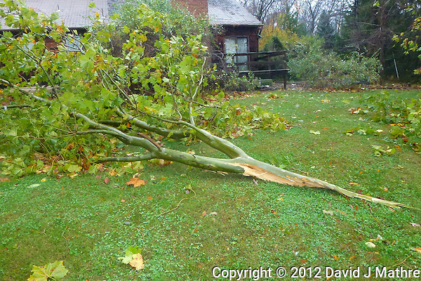 Hurricane Sandy Aftermath in Skillman New Jersey Day 1. Image taken with a Leica V-Lux 30 camera. (David J Mathre)