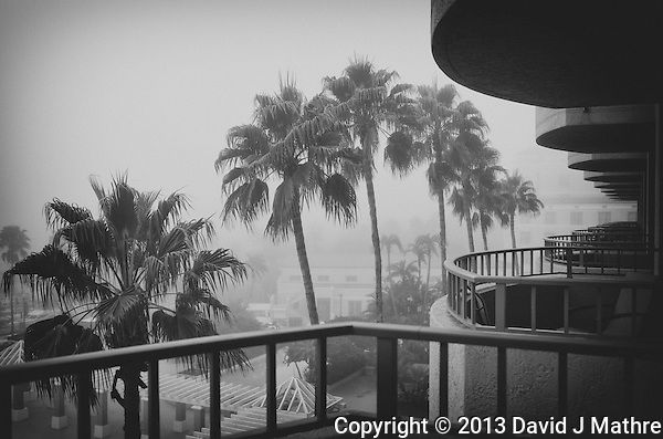 Foggy Morning in St. Petersburg from a Balcony at the Vinoy Hotel. Image taken with a Leica X2 camera (ISO 100, 24 mm, f/3.5, 1/80 sec). Converted to B&W with NIK Silver Efex Pro 2. (David J Mathre)