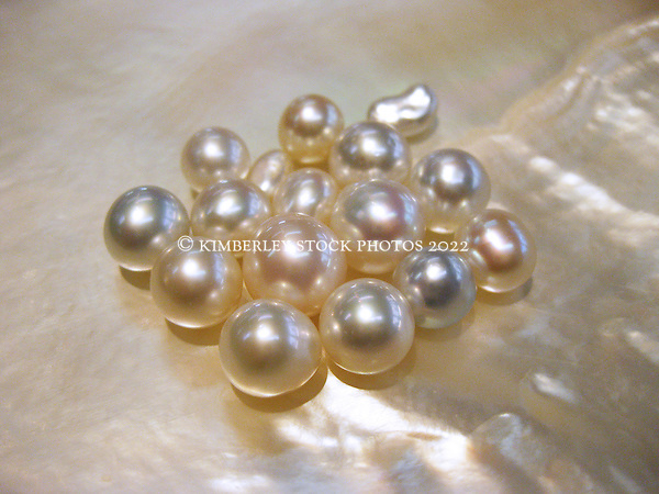 Cultured and keshi pearls lie in a pearl shell from the oyster Pinctada maxima, the gold or silver lipped oyster.  Broome is famous for its south sea pearls. (Annabelle Sandes)