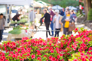 farmers market in spring of 2015. Photo by Beth Hall (Beth Hall)
