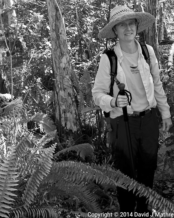 Just about out of the jungle. Swamp walk with Kristen and Angela in the Everglades behind  Clyde Butcher's Big Cyprus Gallery. Image taken with a Leica X2 camera (ISO 100, 24 mm, f/4, 1/100 sec). (David J Mathre)
