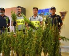 Sequestrata piantagione con 5.730 piante di marijuana