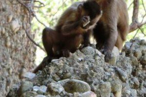 scimmie-schegge-1-a-320x234
