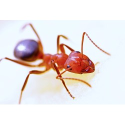 Small Crop Of Does Diatomaceous Earth Kill Ants