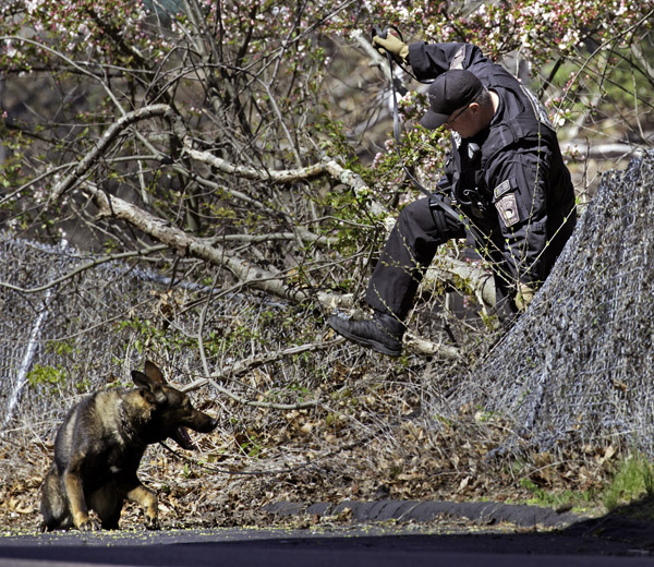 04/27/2016-West Roxbury,MA. Boston police K-9 officer John Quinn is seen moments after a suspect was arrested in connection with a long-duration police pursuit that began in Walpole, and ended in West Roxbury. The car caught fire at the 1400 block of VFW Parkway. Staff Photo by Mark Garfinkel