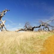 Dead Tree - Photo by f_lopiano - http://flic.kr/p/3x9syK
