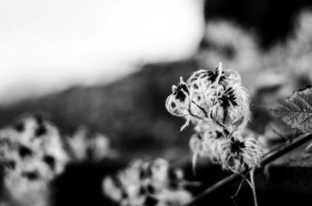 pierrebrunel-web--7