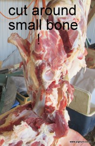 Small bone to be cut around