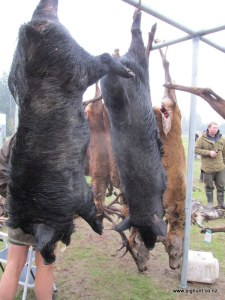 Heath's boar on the left and Hannah's boar on the right