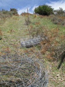 Looking back up the fence line as i was rolling the new netting down to the old netting