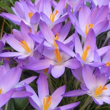 Pippa_Jameson_Interiors_Spring.3