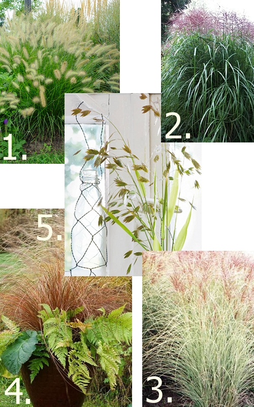 top 5 grasses for the garden