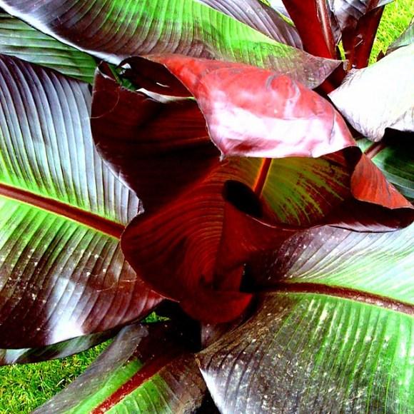Banana palm Lindas zen garden before and after via www.pithandvigor.com