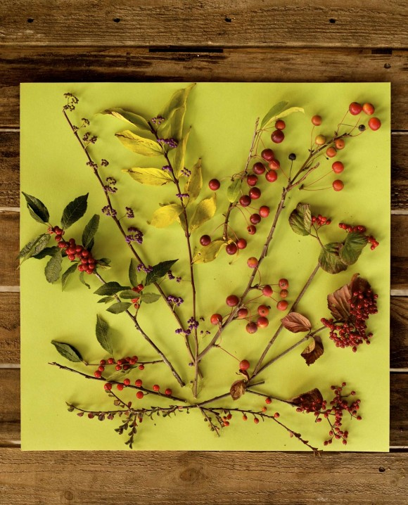 viburnum callicarpa crabapple berries