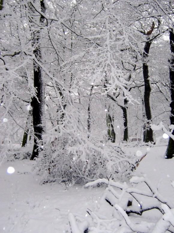 sparkly winter snow