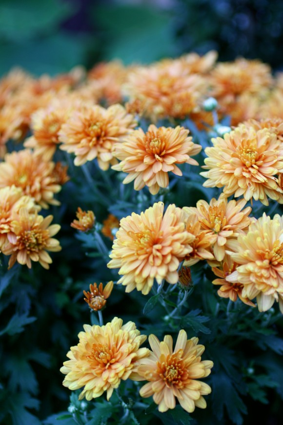 Fall porch decorating ideas orange mums from www.pithandvigor.com