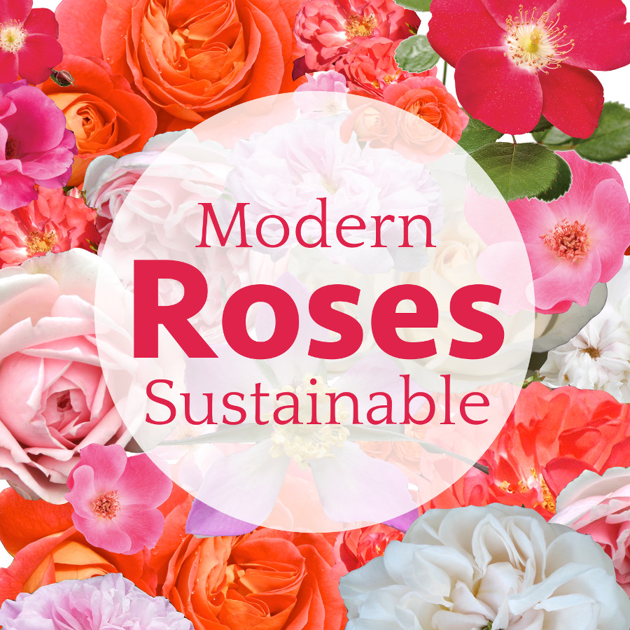 Modern Sustainable Roses
