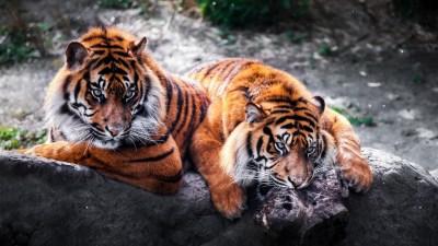 Animal Wallpapers HD | PixelsTalk.Net