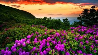 Beautiful Nature Wallpaper | PixelsTalk.Net