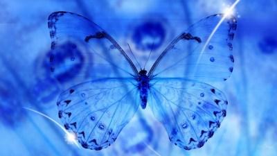 Blue Butterfly Wallpaper HD | PixelsTalk.Net