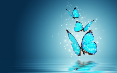 Blue Butterfly Wallpaper HD | PixelsTalk.Net